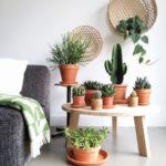 Комнатные растения в интерьере на столике