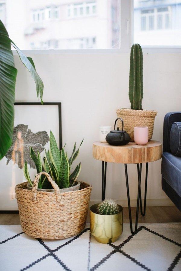 кактусы в гостиной