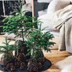 Новогодние украшения 2019: елочки в вазах